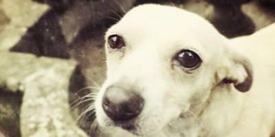 ¿Qué se necesita para adoptar a un perro en México?