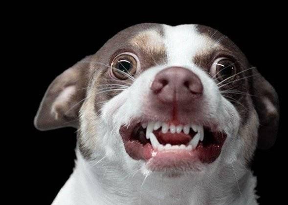 VIRAL: El perro que odia que lo besen se convierte en estrella de las redes sociales