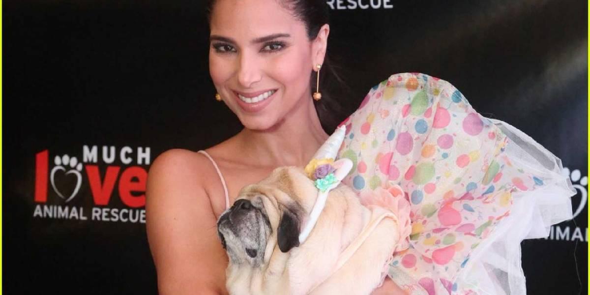 Roselyn Sánchez muestra su lado más sensible para promover la adopción de mascotas