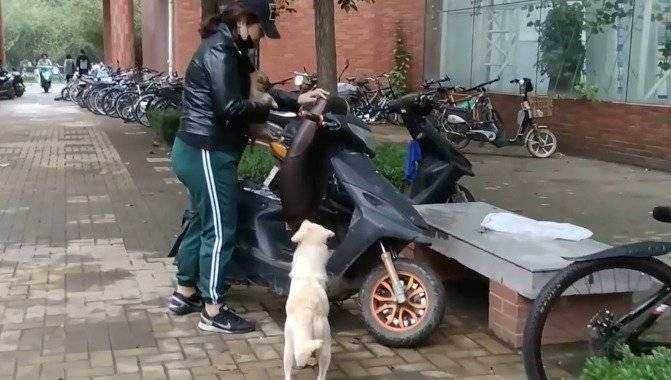despedida madre perro