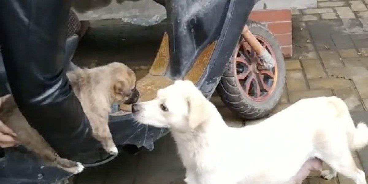 El triste último beso: la desgarradora despedida de una perrita a su cachorro antes de partir a un nuevo hogar