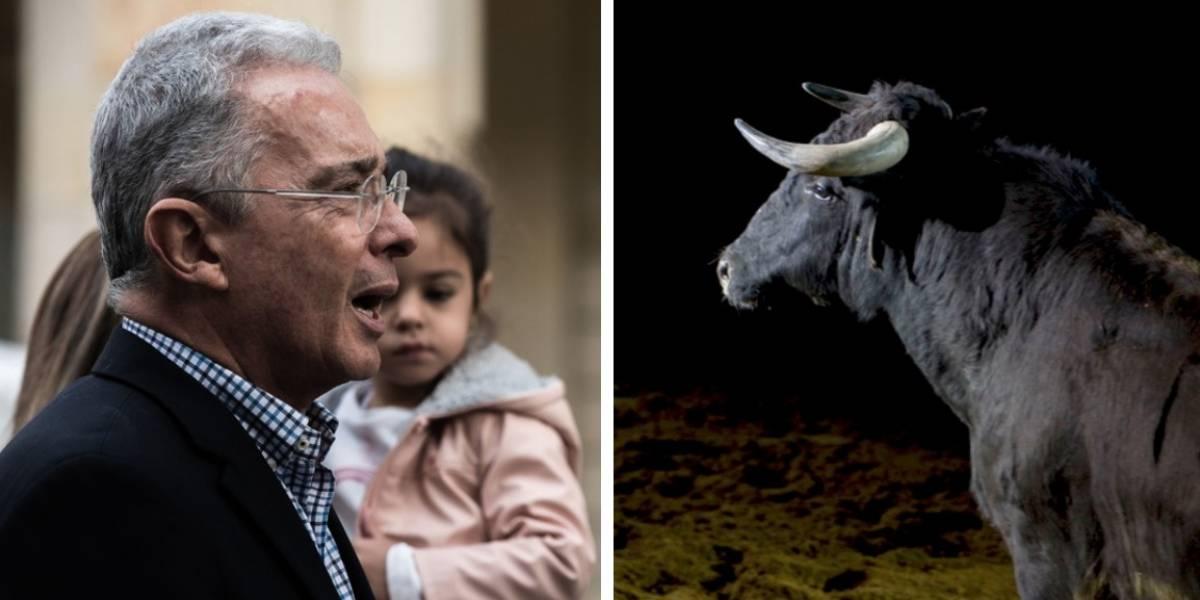 ¿Que qué? El tuit de Álvaro Uribe sobre un toro que despertó burlas