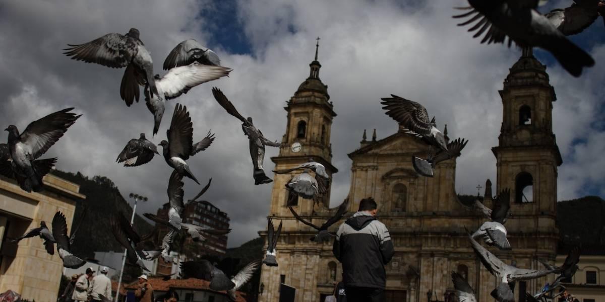 Por cada metro cuadrado en donde debería haber cinco palomas, se encuentran hasta 33