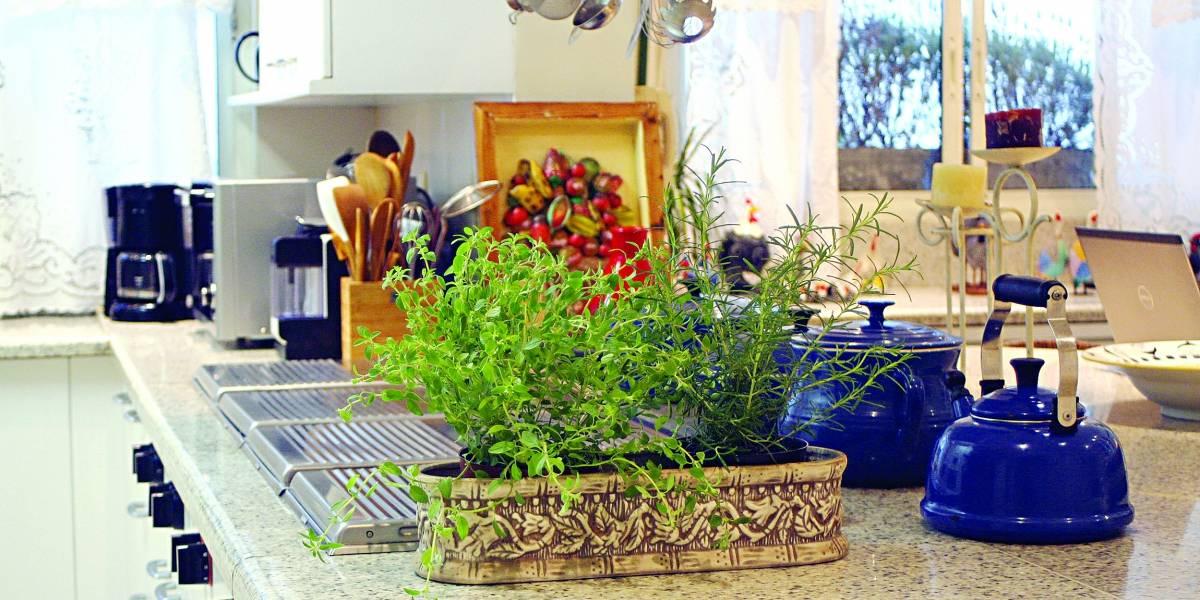 Confira dicas para ter um jardim em seu apartamento