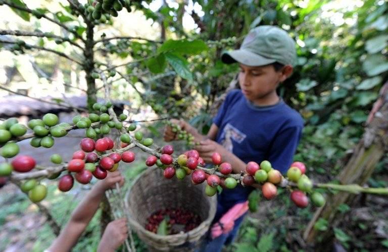 Café en Honduras