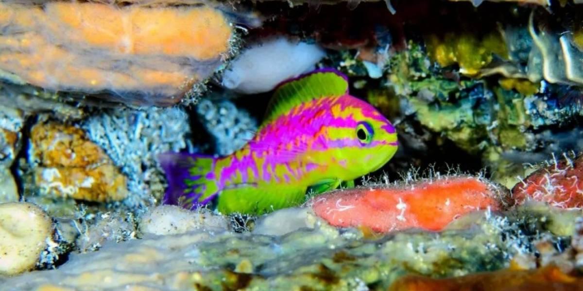 """""""Es uno de los peces más hermosos que he visto"""": el increíble descubrimiento en las profundidades del Atlántico que asombra al mundo"""