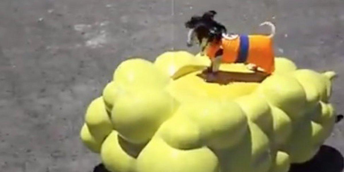 """""""Dogku"""": disfrazó a su perro como protagonista de Dragon Ball y lo transformó en el más amoroso viral"""
