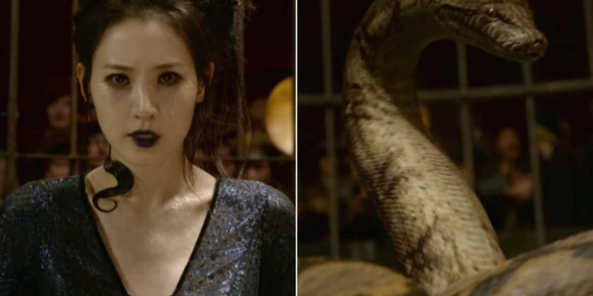 Fãs de 'Harry Potter' estão impactados com revelação de J.K. Rowling sobre Nagini