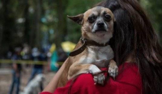El cuidado de las mascotas a una persona de confianza también se puede incluir en un testamento. Lo que no está permitido es heredar dinero o bienes a un animal de compañía / Cuartoscuro