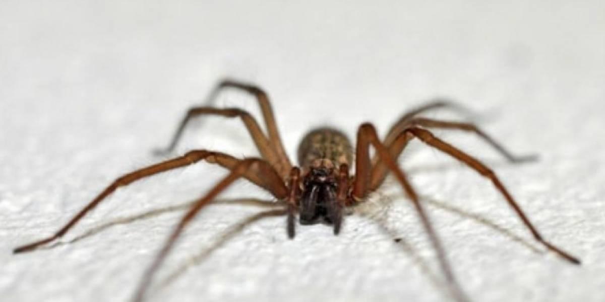 Servicio de Salud Valparaíso-San Antonio deberá pagar $250 millones a familia de hombre que falleció por mordedura de araña de rincón