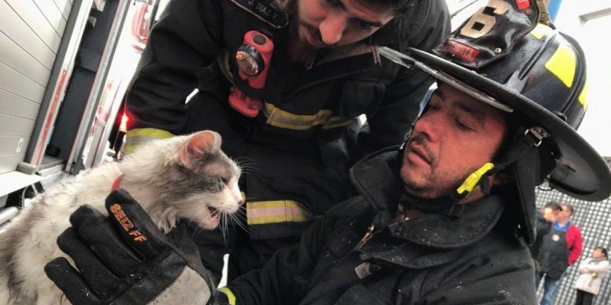 """""""Grande Bomberos de Chile"""": voluntarios se llenan de elogios tras rescatar a asustado gatito desde incendio en pleno centro de Santiago"""