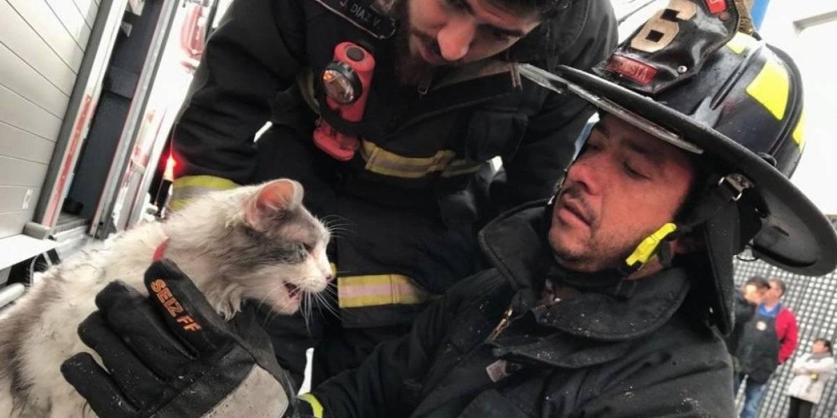 Voluntarios se llenan de elogios tras rescatar a gatito en un incendio