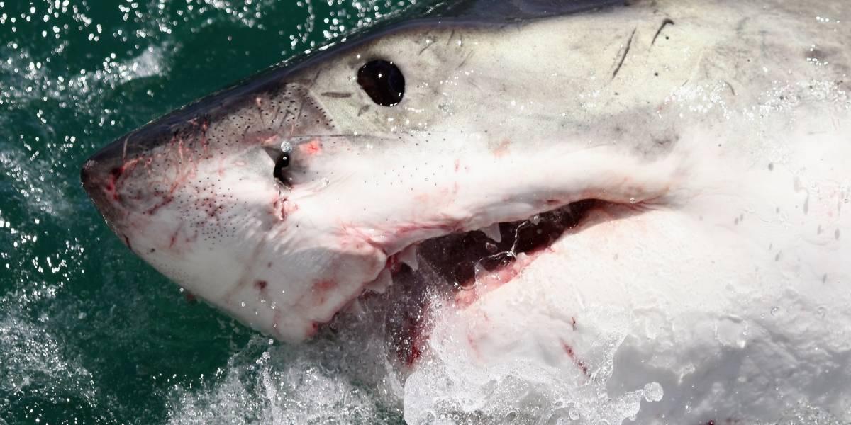 Tiburón ataca a joven de 13 años en playa de California