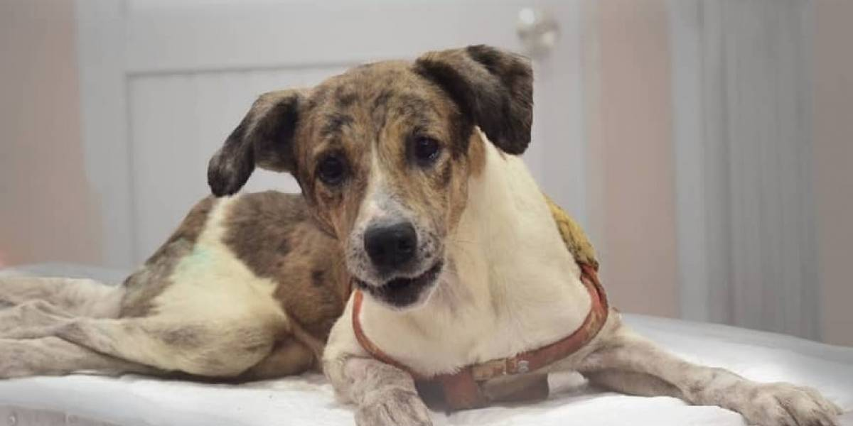 Murió 'Niño Flaco', el perro rescatado que apareció en video siendo maltratado