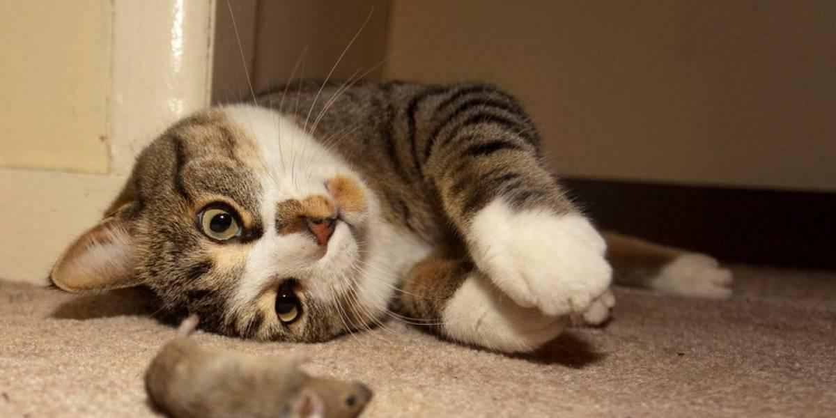 Nunca más se podrá ver a Tom y Jerry con los mismos ojos: estudio derriba el mayor mito entre los gatos y ratones