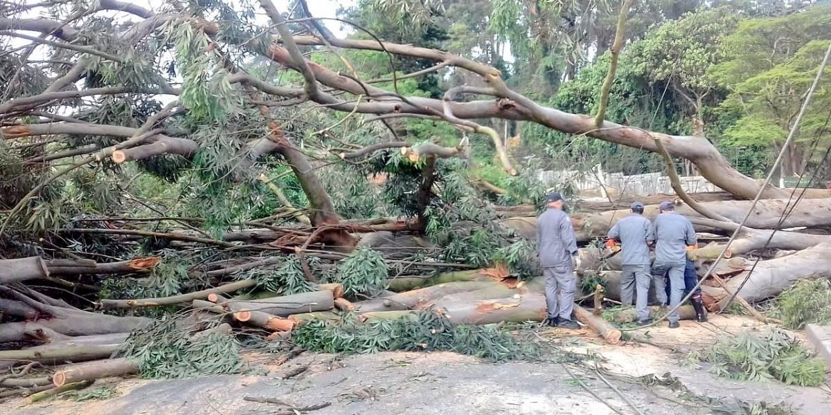 Árvore de grande porte cai e bloqueia estrada do Alvarenga