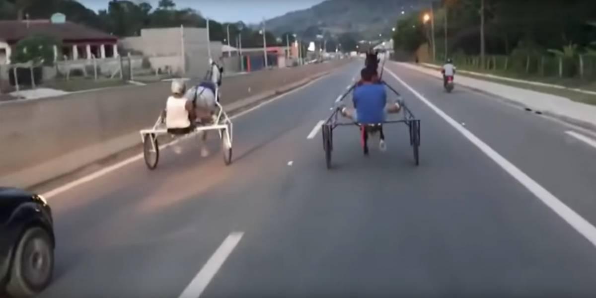 Homens fazem racha de charretes em rodovia de São Paulo e cavalo cai