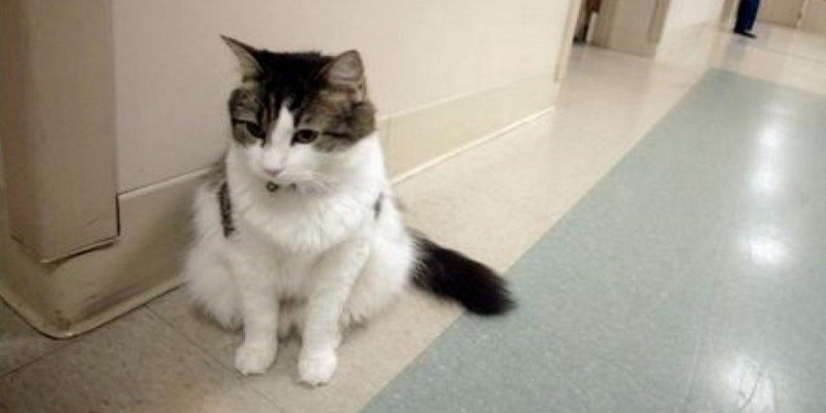 Oscar, el gato que podía predecir la muerte