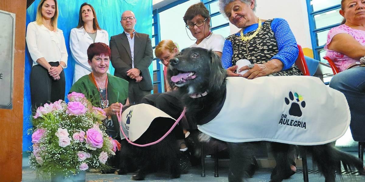 Cães auxiliam na terapia de idosos em Santo André