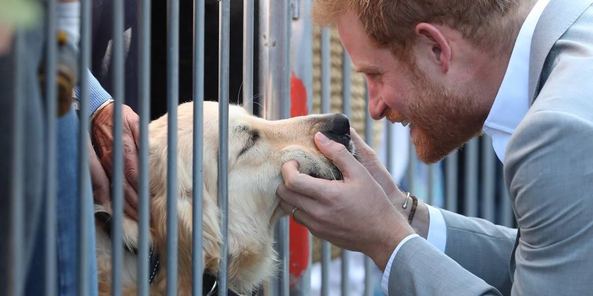 Para morrer de amor! O gesto carinhoso do príncipe Harry com um cãozinho