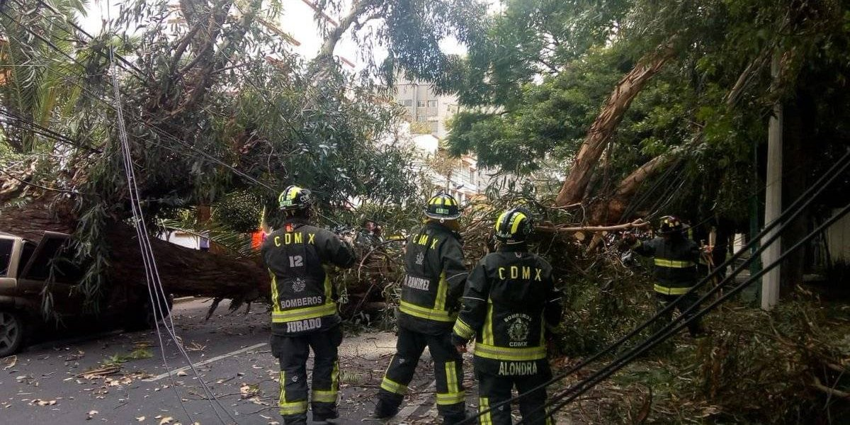 Árbol cae en la colonia Del Valle sobre varios automóviles