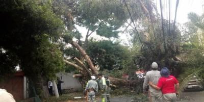 árbol caído en la Del Valle