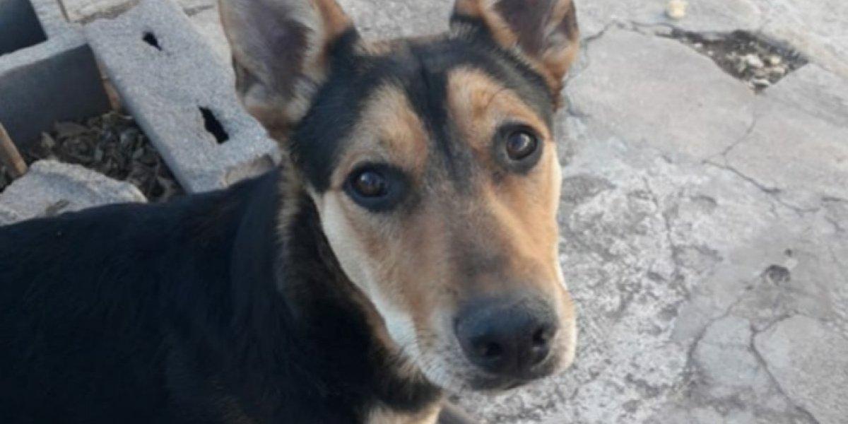 Asesinó a balazos a perrita que le robó su asado: brutal caso de maltrato animal conmociona e indigna a los argentinos