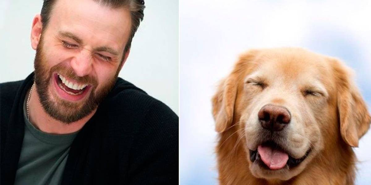 Perfil no Twitter 'compara' fotos de Chris Evans a golden retrievers