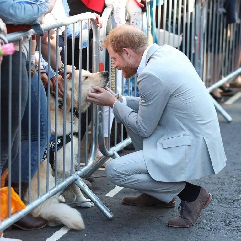 El tierno gesto del príncipe Harry con un perro