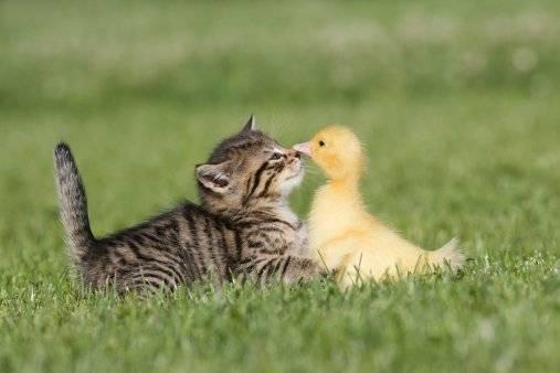 ?Por que se celebra hoy el Dia Mundial de los Animales?