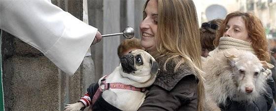 Día de los animales: ¿Por qué se bendice a las mascotas? Getty Images
