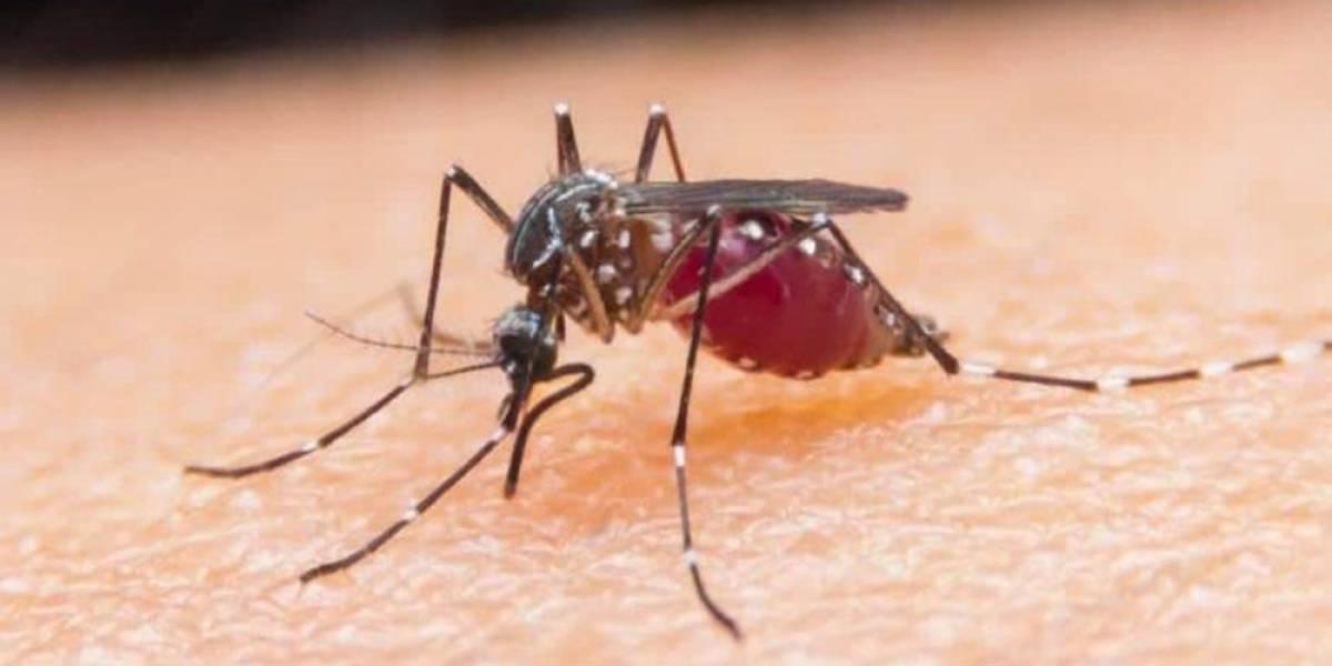 Salud Pública confirma 8 casos de malaria en Santo Domingo Oeste