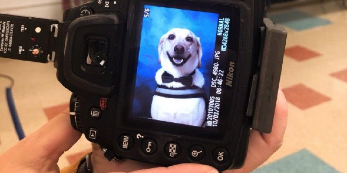 """""""Sólo mira esa sonrisa"""": tierno perrito se robó el corazón de todos en las redes sociales con su divertida foto para el anuario escolar"""