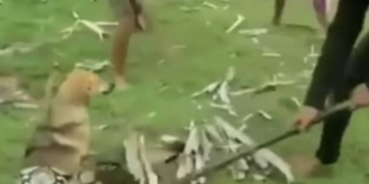Niños enfrentaron a una serpiente para salvar a su perro