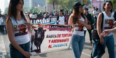 Legisladores-del-PVEM-busca-prohibir-corridas-de-toros