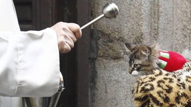 Celebrarán el Día Mundial de los Animales