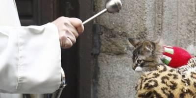 Día de los animales: ¿Por qué se bendice a las mascotas?