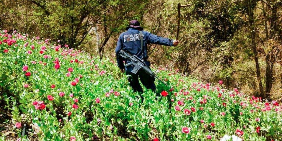 Legalizar drogas afectaría intereses políticos y económicos: IBD