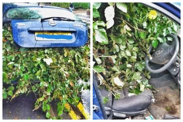 podar árbol ramas auto