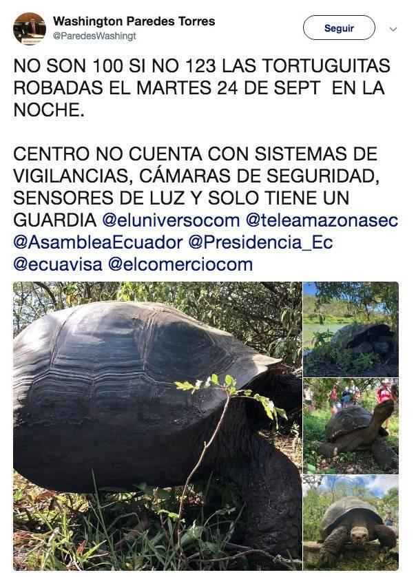 Denuncian robo de más de 100 crías de tortugas gigantes en las islas Galápagos
