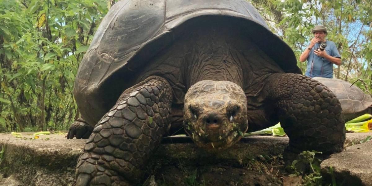 Denuncian robo de más de 100 crías de tortugas gigantes en Galápagos