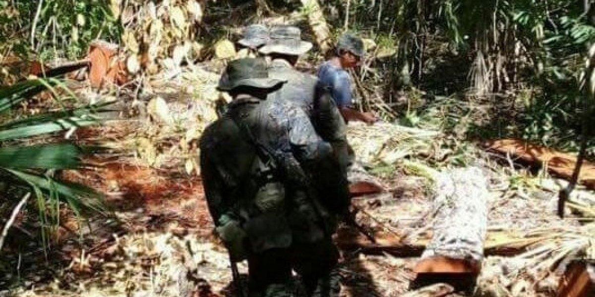 Condenan a hombre por cortar un árbol en área protegida en Petén