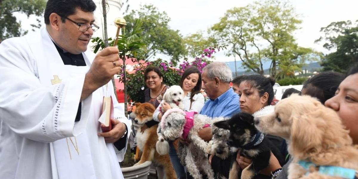 EN IMÁGENES. Mascotas reciben la bendición en la Ermita del Cerrito de la Virgen del Carmen