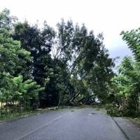 Árbol derribado en Izabal