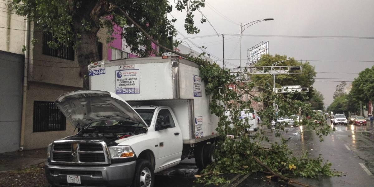 Caída de árboles daña más  que sismos y huracanes