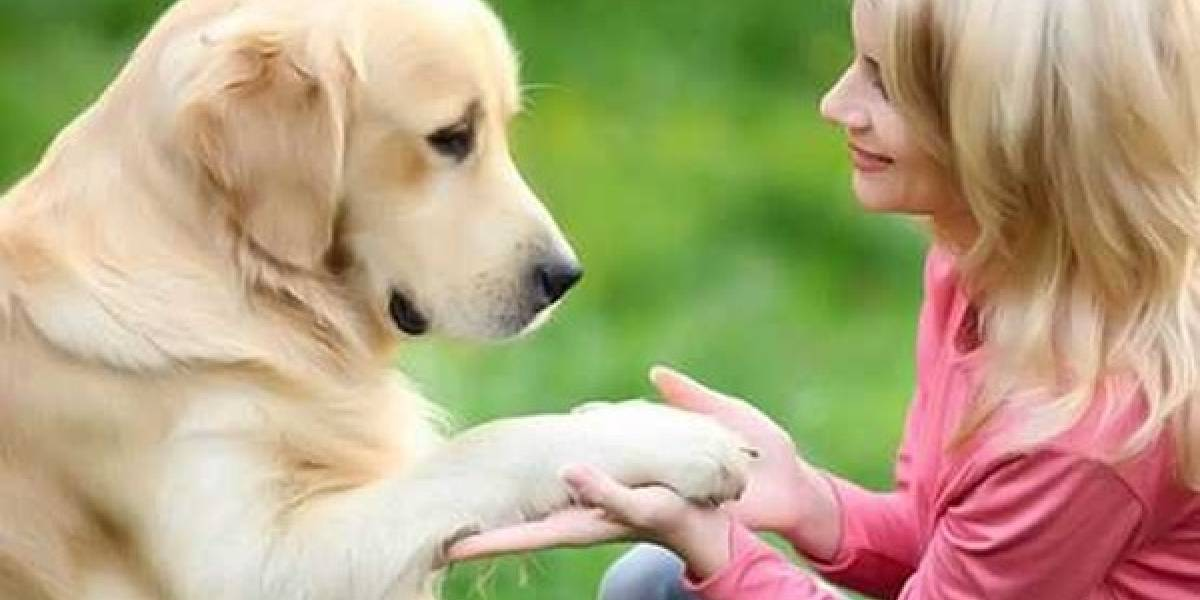 Todos los perritos se van al cielo: en Buin inauguran el cementerio de mascotas más grande del país