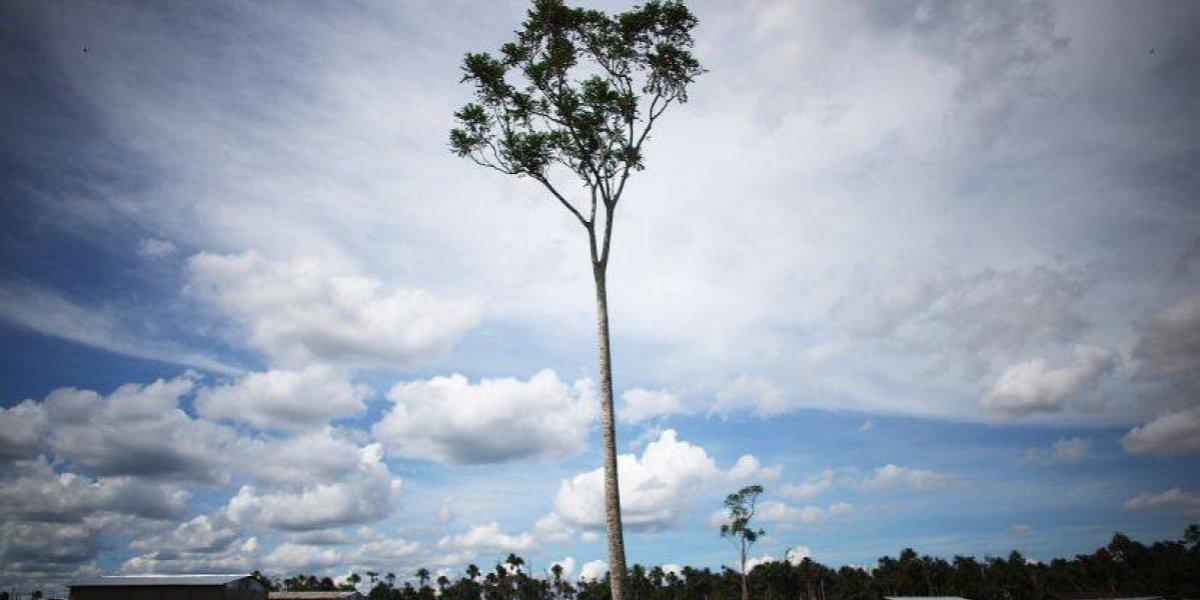 WWF recomienda suscribir Acuerdo de Escazú, clave para consolidar la democracia ambiental