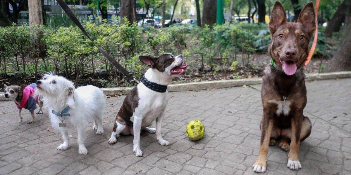¿Qué hacer ante el secuestro de perros?