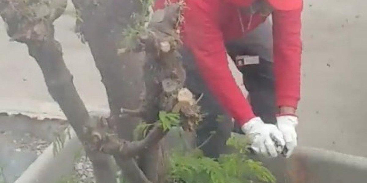 Tras fatal episodio de quema de abejas en Antofagasta: especialistas piden crear lista de apicultores para emergencias municipales