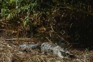 Ecocidio: derrama de Pemex mata decenas de especies en Veracruz